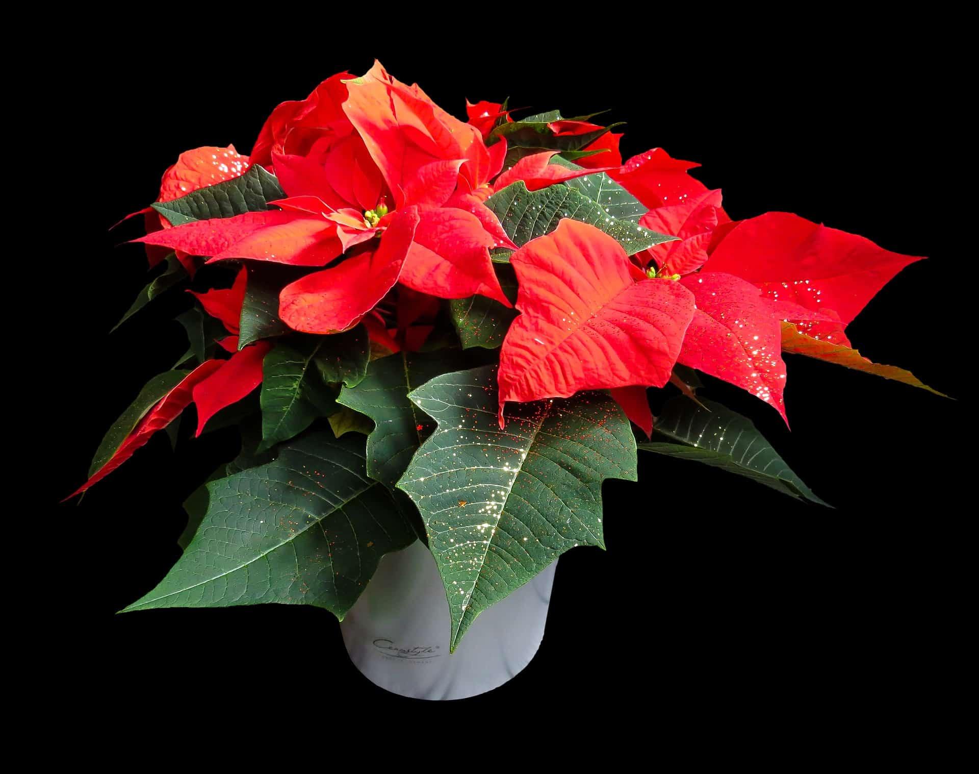 flower-1829702_1920