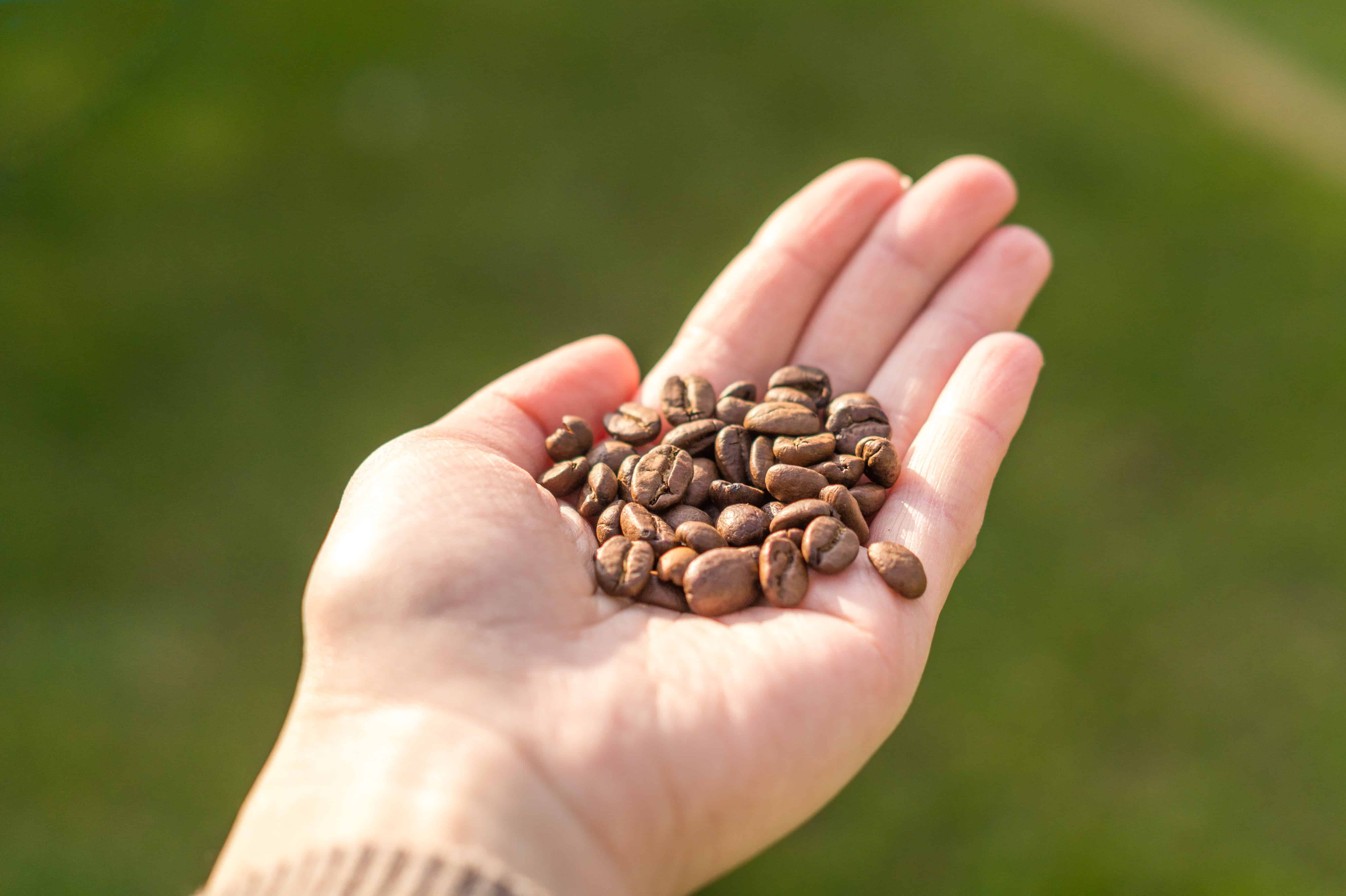 person-holding-coffee-beans-927754