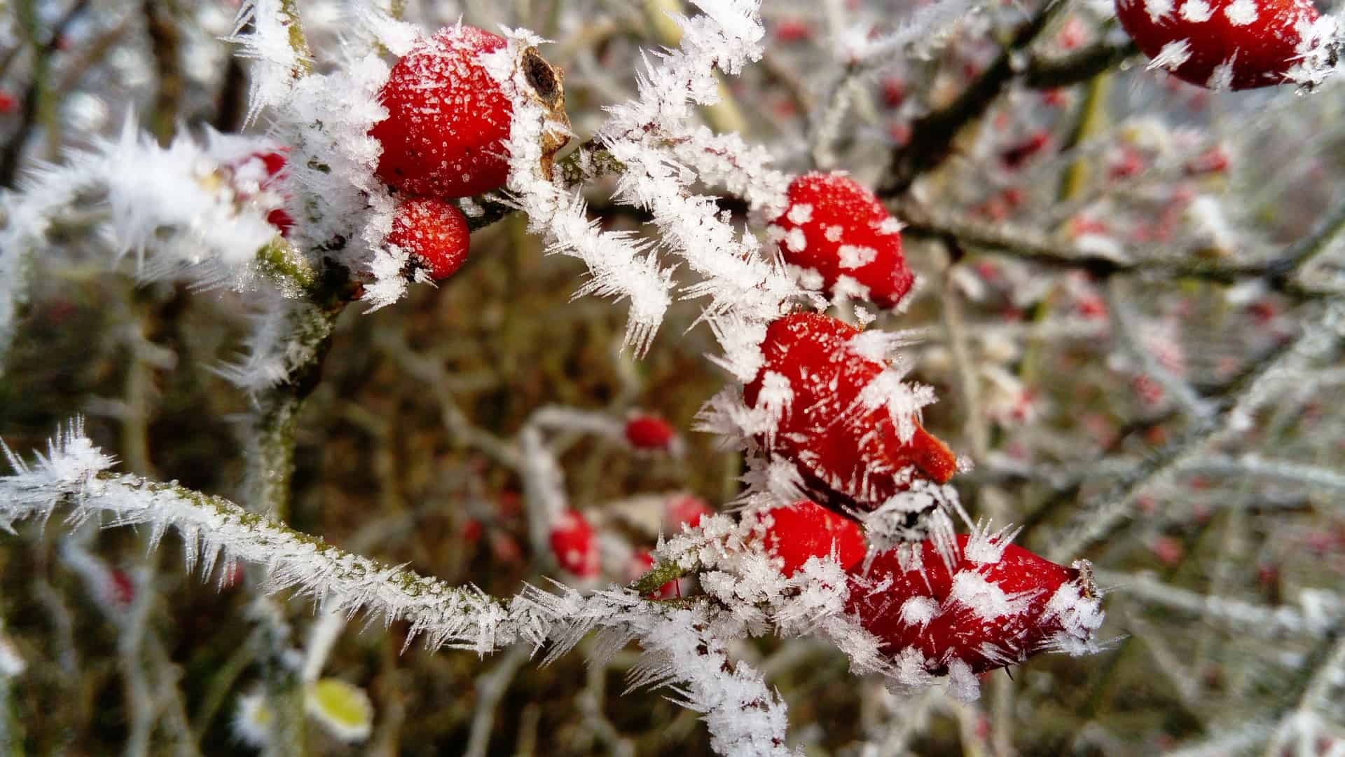 frost-3018057_1920